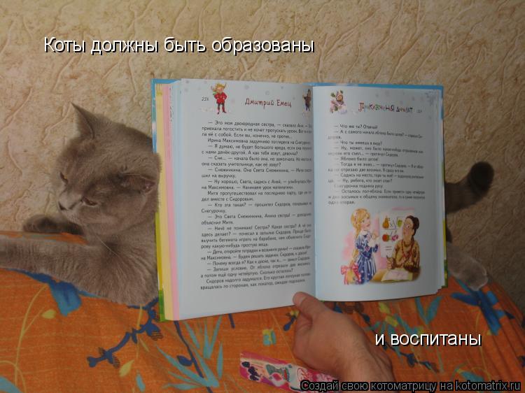 Котоматрица: Коты должны быть образованы и воспитаны