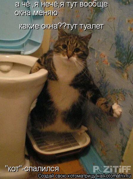 """Котоматрица: а чё ,я нечё,я тут вообще окна меняю какие окна??тут туалет """"кот""""-спалился"""