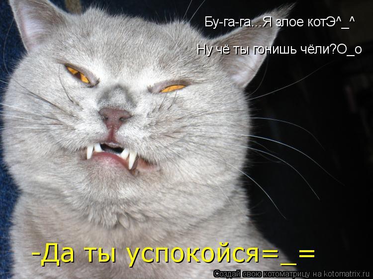 Котоматрица: Бу-га-га...Я злое котЭ^_^ Ну чё ты гонишь чёли?О_о -Да ты успокойся=_=