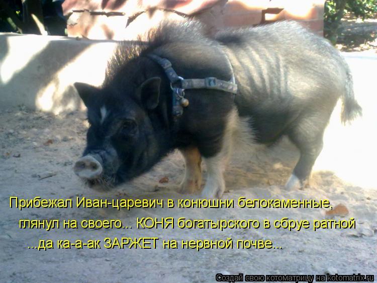 Котоматрица - Прибежал Иван-царевич в конюшни белокаменные, глянул на своего... КОНЯ