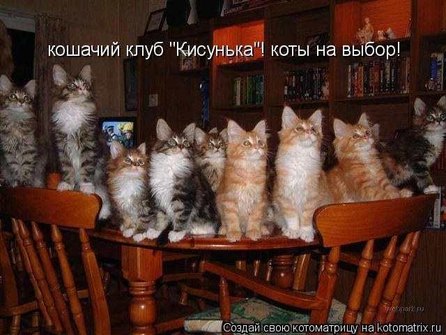 """Котоматрица: кошачий клуб """"Кисунька""""! коты на выбор!"""