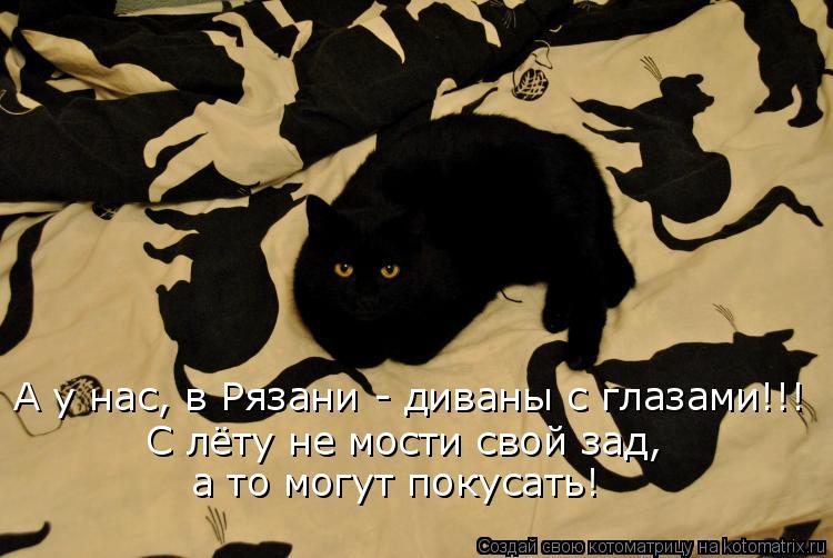 Котоматрица: А у нас, в Рязани - диваны с глазами!!! С лёту не мости свой зад, а то могут покусать!