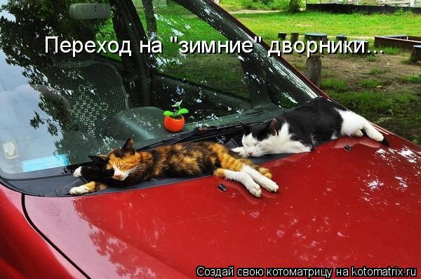 "Котоматрица - Переход на ""зимние"" дворники..."