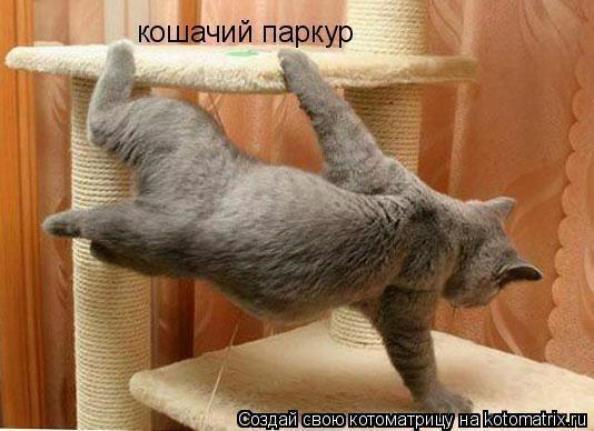 Котоматрица: кошачий паркур