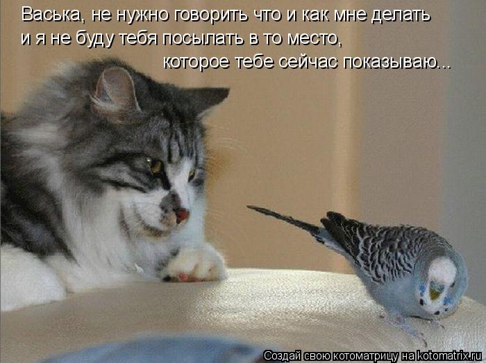 Котоматрица: Васька, не нужно говорить что и как мне делать и я не буду тебя посылать в то место,  которое тебе сейчас показываю...