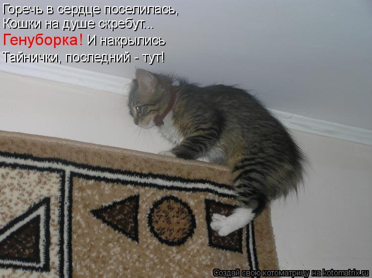 Котоматрица - Горечь в сердце поселилась, Кошки на душе скребут... Генуборка!   И на
