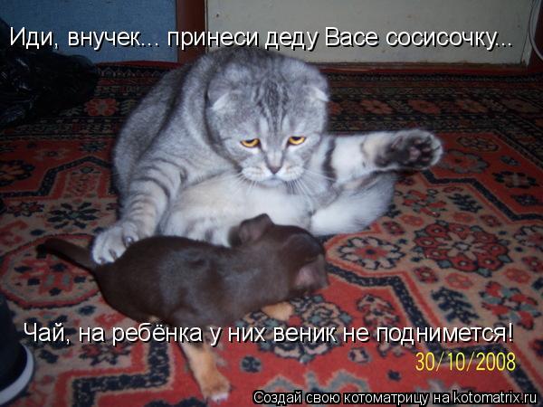 Котоматрица: Иди, внучек... принеси деду Васе сосисочку...  Чай, на ребёнка у них веник не поднимется!