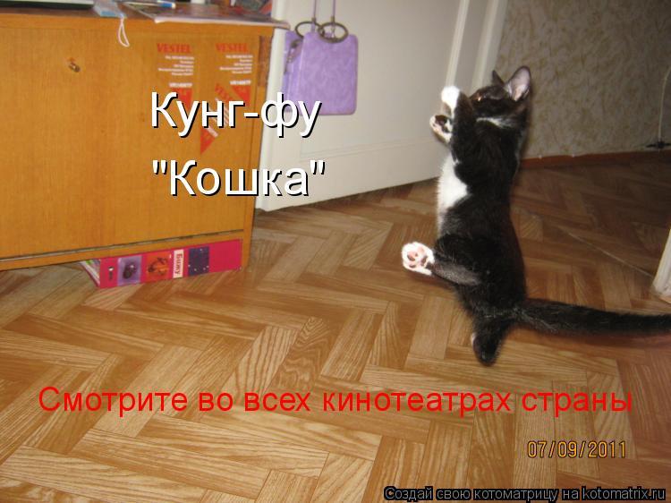 """Котоматрица: Кунг-фу """"Кошка"""" Смотрите во всех кинотеатрах страны"""
