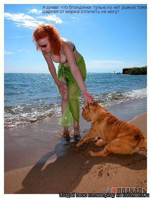 Котоматрица: я думал что блондинки тупые,но нет рыжие тоже шарпея от моржа отличить не могут