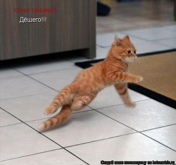 Котоматрица: Уроки танцев!!! Дёшего!!!