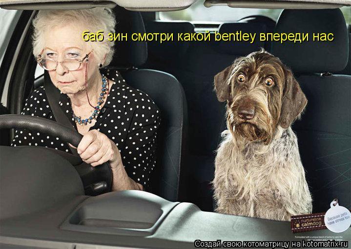 Котоматрица: баб зин смотри какой bentley впереди нас