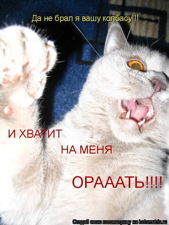 Котоматрица: Да не брал я вашу колбасу!!! И ХВАТИТ  НА МЕНЯ ОРАААТЬ!!!!