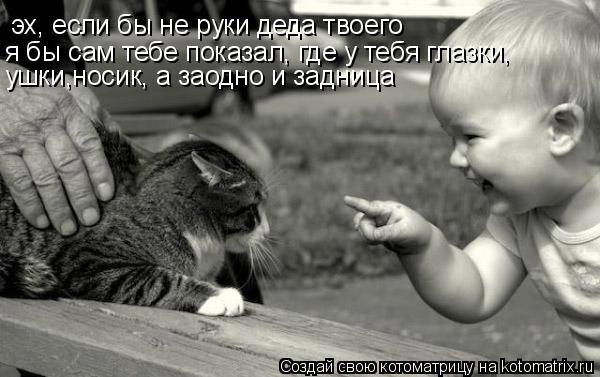 Котоматрица: эх, если бы не руки деда твоего я бы сам тебе показал, где у тебя глазки, ушки,носик, а заодно и задница