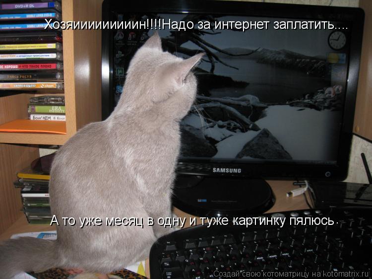 Котоматрица: Хозяииииииииин!!!!Надо за интернет заплатить.... А то уже месяц в одну и туже картинку пялюсь .