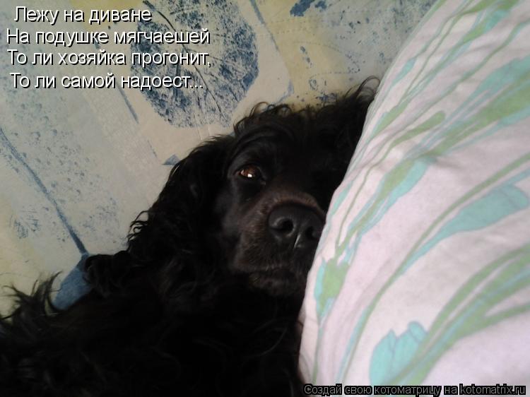 Котоматрица: Лежу на диване  На подушке мягчаешей То ли хозяйка прогонит, То ли самой надоест...