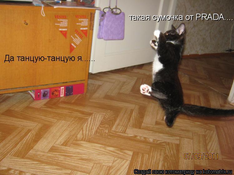 Котоматрица: Да танцую-танцую я...... такая сумочка от PRADA.......