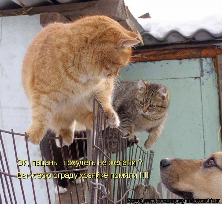 Котоматрица: Эй, пацаны, похудеть не желали ? Вы ж всю ограду хозяйке помяли !!!!