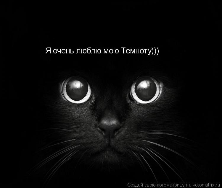 Котоматрица: Я очень люблю мою Темноту)))