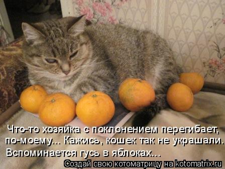Котоматрица: Что-то хозяйка с поклонением перегибает,  по-моему... Кажись, кошек так не украшали... Вспоминается гусь в яблоках...