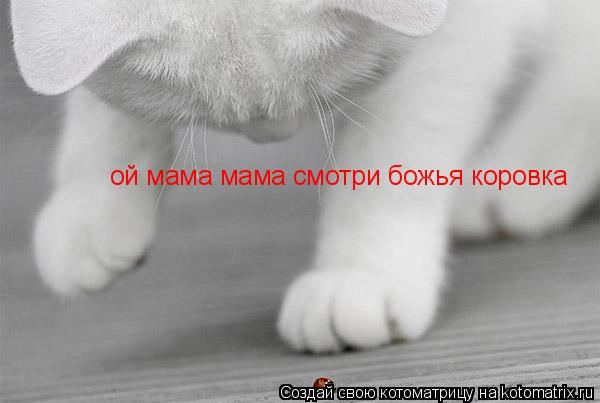Котоматрица: ой мама мама смотри божья коровка