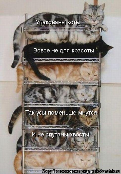 Котоматрица: Вовсе не для красоты Так усы поменьше мнутся И не спутаны хвосты Упакованы коты
