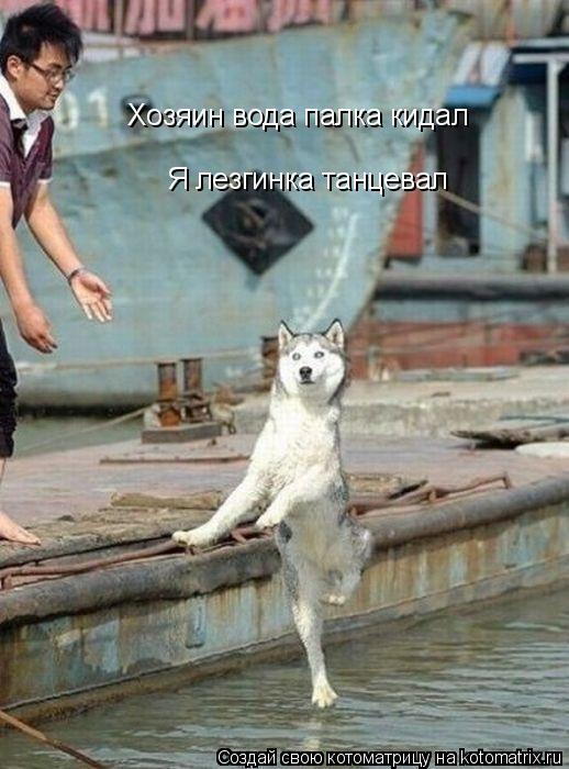 Котоматрица: Хозяин вода палка кидал Я лезгинка танцевал