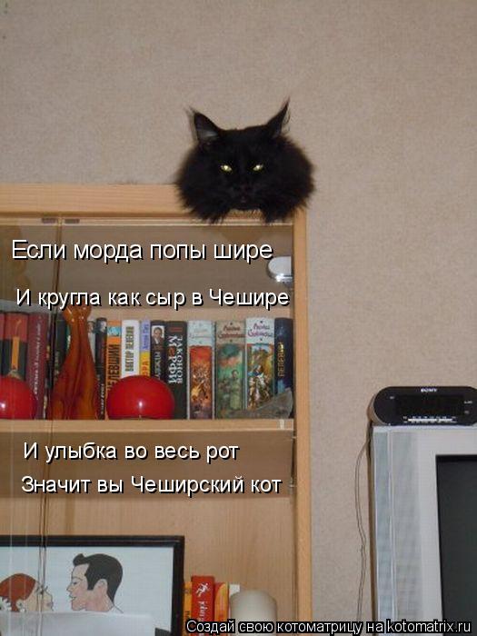 Котоматрица: Если морда попы шире И кругла как сыр в Чешире И улыбка во весь рот Значит вы Чеширский кот