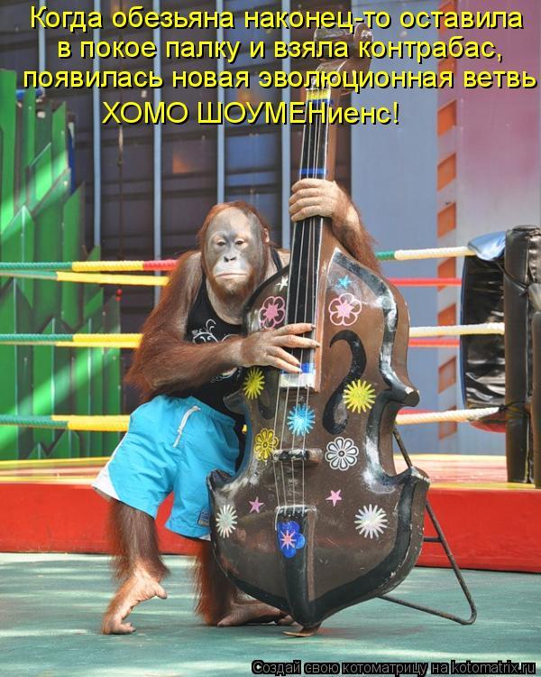 Котоматрица: Когда обезьяна наконец-то оставила  в покое палку и взяла контрабас, появилась новая эволюционная ветвь ХОМО ШОУМЕНиенс!