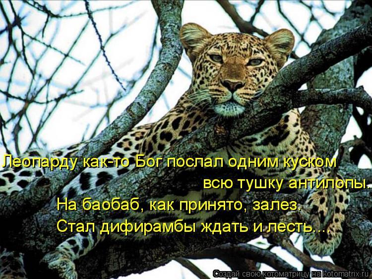 Котоматрица: Леопарду как-то Бог послал одним куском всю тушку антилопы. На баобаб, как принято, залез. Стал дифирамбы ждать и лесть....