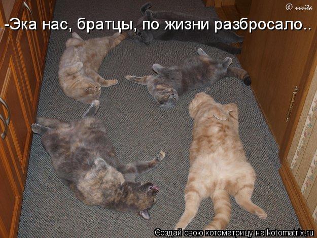 Котоматрица: -Эка нас, братцы, по жизни разбросало..