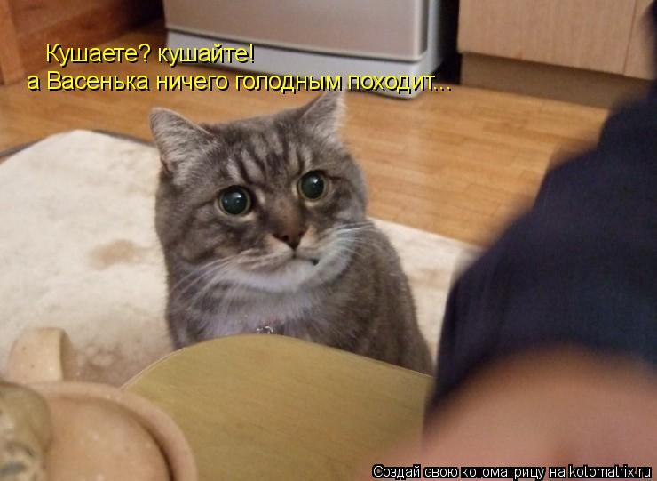Котоматрица: Кушаете? кушайте! а Васенька ничего голодным походит...
