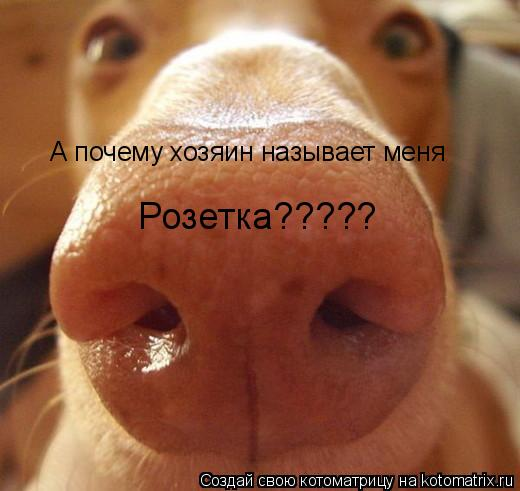 Котоматрица: А почему хозяин называет меня  Розетка?????