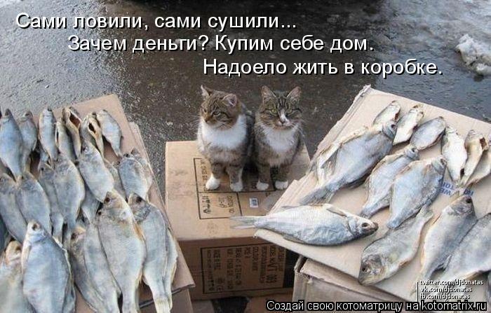 Котоматрица: Сами ловили, сами сушили... Зачем деньги? Купим себе дом. Надоело жить в коробке.