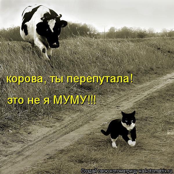 Котоматрица: корова, ты перепутала! это не я МУМУ!!!
