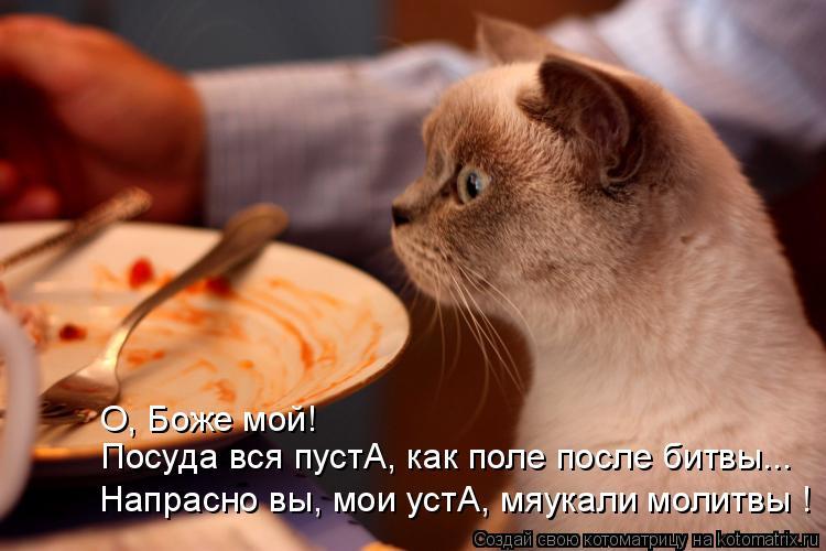 Котоматрица - Посуда вся пустА, как поле после битвы... Напрасно вы, мои устА, мяука
