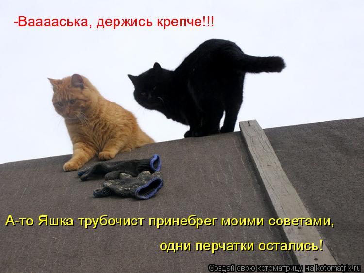 Котоматрица: -Вааааська, держись крепче!!!   А-то Яшка трубочист принебрег моими советами,  одни перчатки остались!