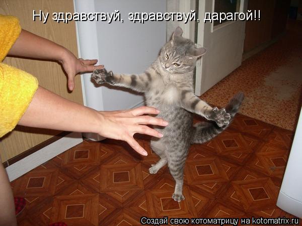 Котоматрица: Ну здравствуй, здравствуй, дарагой!!