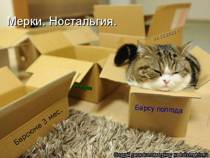 Котоматрица - 01.12.2010 г. Барсюне 3 мес. Барсу полгода есяцев Мерки. Ностальгия.