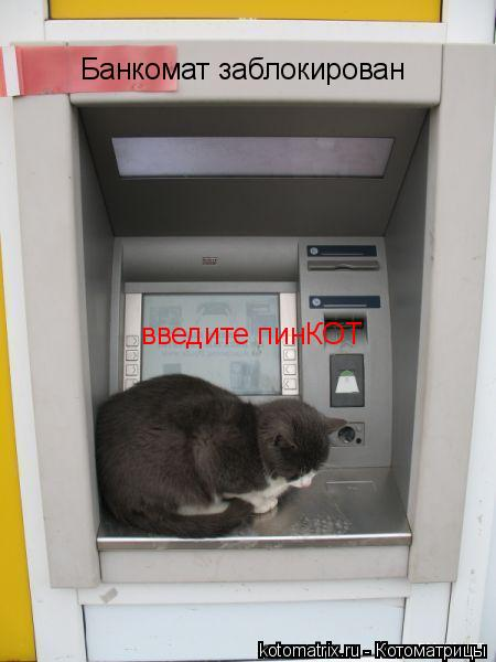 Котоматрица: Банкомат заблокирован введите пинКОТ