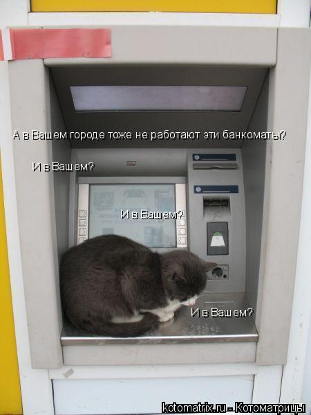 Котоматрица: А в Вашем городе тоже не работают эти банкоматы? И в Вашем? И в Вашем? И в Вашем?