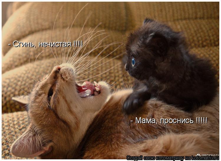 Котоматрица: - Сгинь, нечистая !!!! - Мама, проснись !!!!!