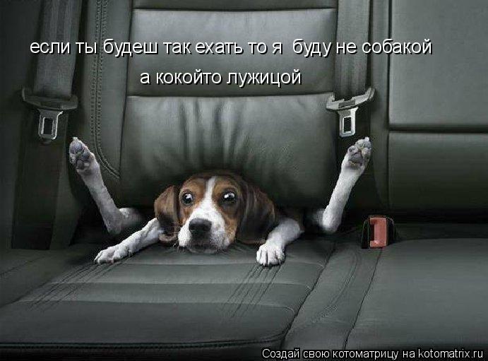 Котоматрица: если ты будеш так ехать то я  буду не собакой а кокойто лужицой