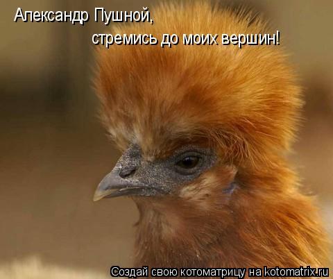 Котоматрица: Александр Пушной стремись до моих вершин!Видишь какого Александр Пушной, Александр Пушной, стремись до моих вершин!