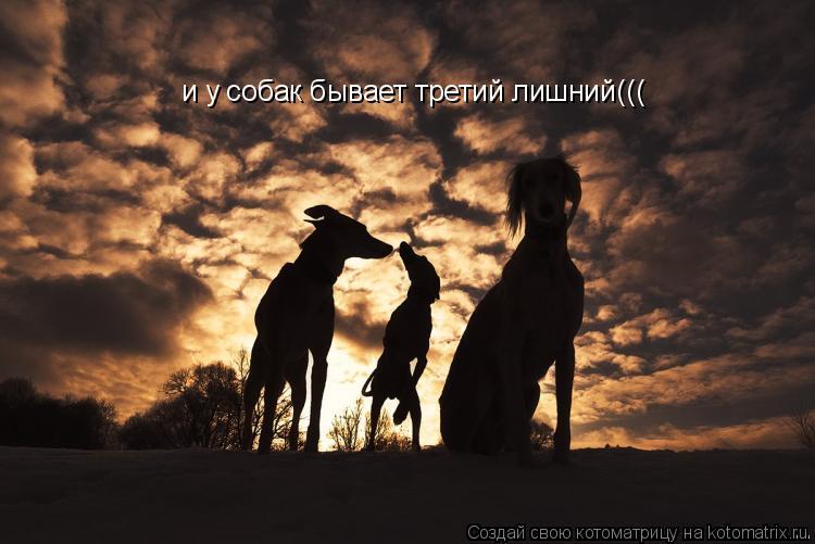 Котоматрица: и у собак бывает третий лишний(((