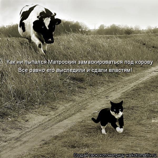 Котоматрица: Как ни пытался Матроскин замаскироваться под корову Все равно его выследили и сдали властям!