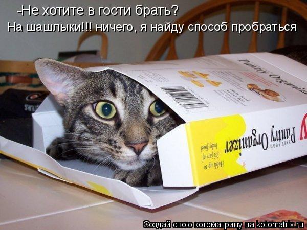 Котоматрица: -Не хотите в гости брать?  На шашлыки!!! ничего, я найду способ пробраться