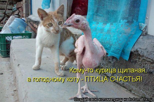 Котоматрица: Кому-то курица щипаная, а голодному коту - ПТИЦА СЧАСТЬЯ!