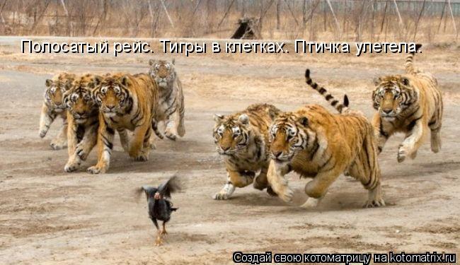 Котоматрица: Полосатый рейс. Тигры в клетках. Птичка улетела.