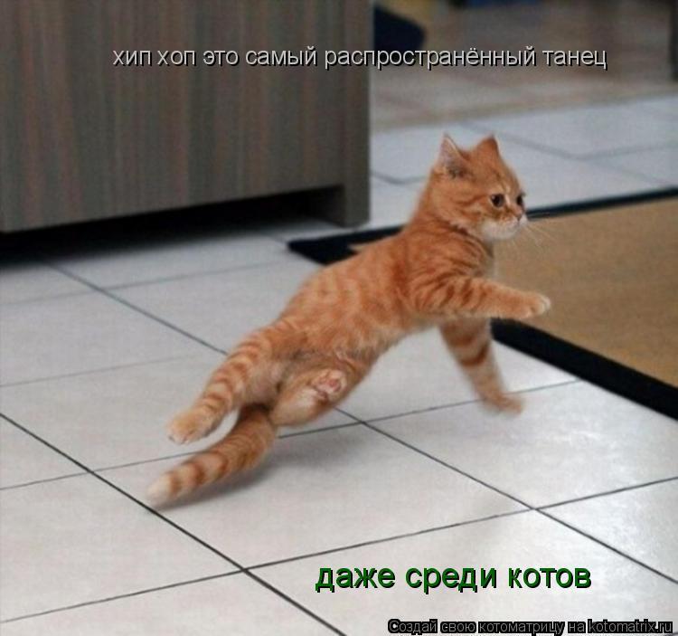 Котоматрица: хип хоп это самый распространённый танец хип хоп это самый распространённый танец даже среди котов