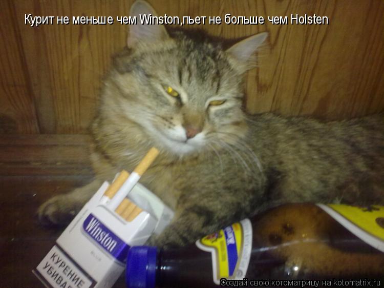 Котоматрица: Курит не меньше чем Winston,пьет не больше чем Holsten